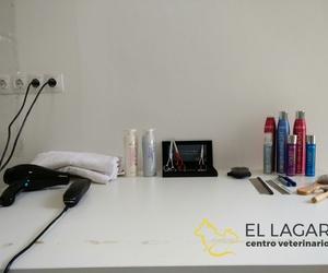 Servicio de peluquería canina y felina en El Sauzal