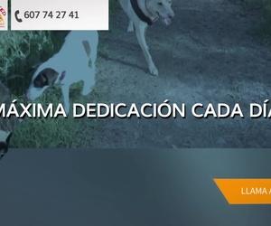 Galería de Protectoras de animales en La Línea de la Concepción | Animal in Need & Prodean