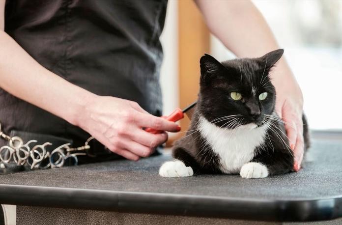 Mi gato también va a la peluquería