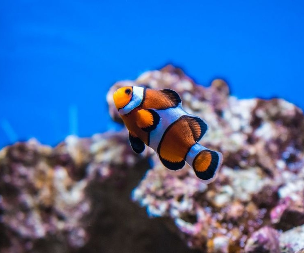 Tipos de peces para acuarios