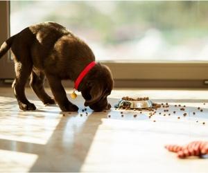 ¿Sabes cada cuánto debes dar de comer a tu perro?