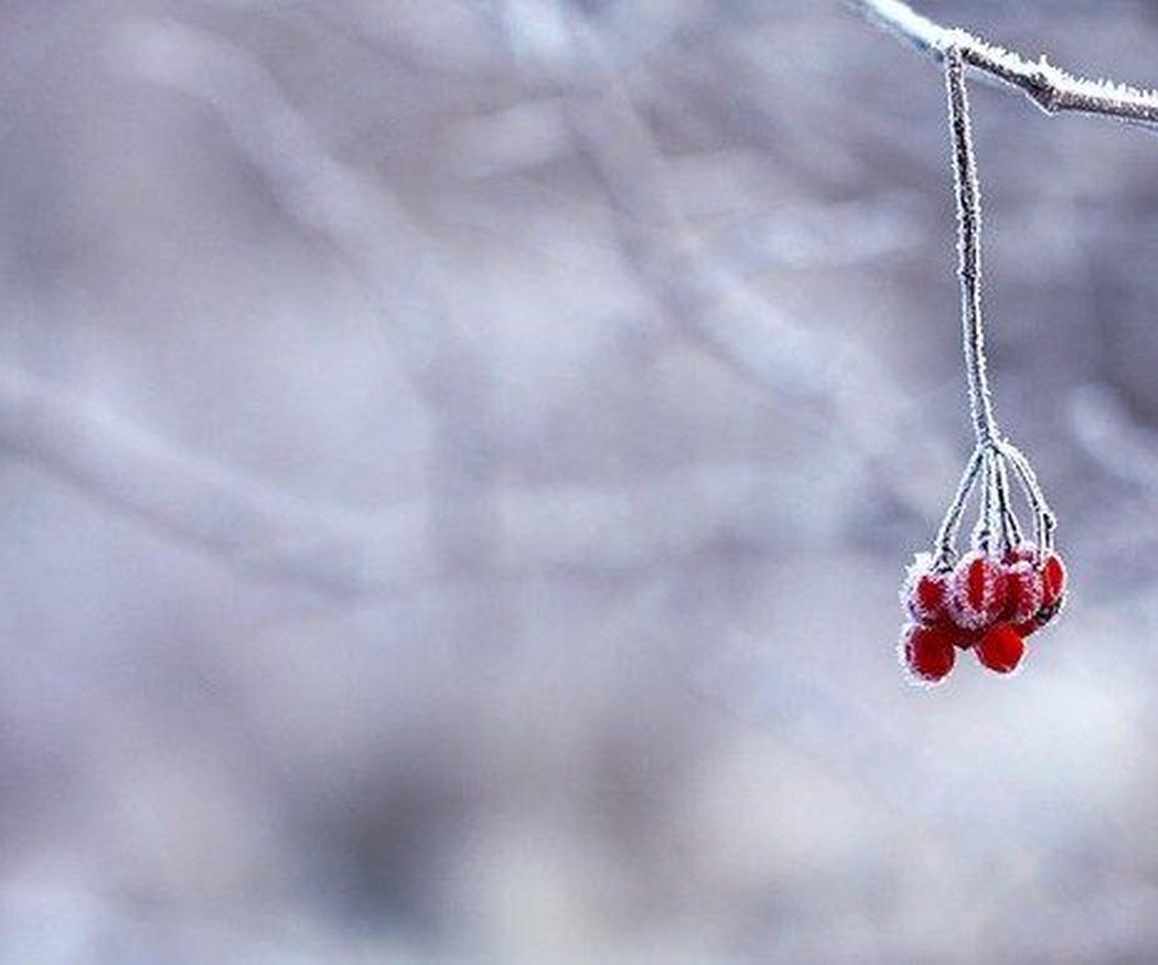 Flores de invierno para decorar tus espacios