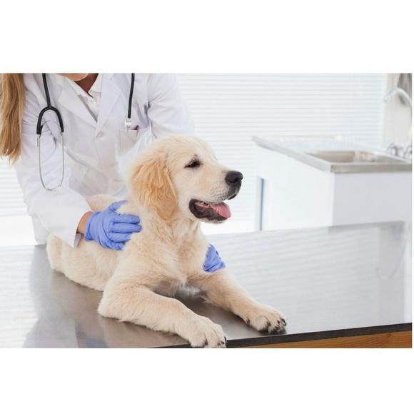 Hospitalización: Especialidades y Servicios de Centro Veterinario Don Can