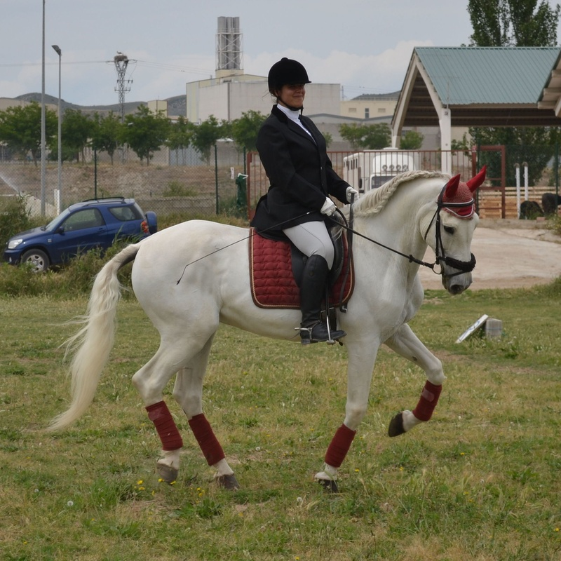 ESCUELA DE EQUITACIÓN: PERFECCIONAMIENTO Y NIVELES AVANZADOS: Servicios de Hípica Riding School