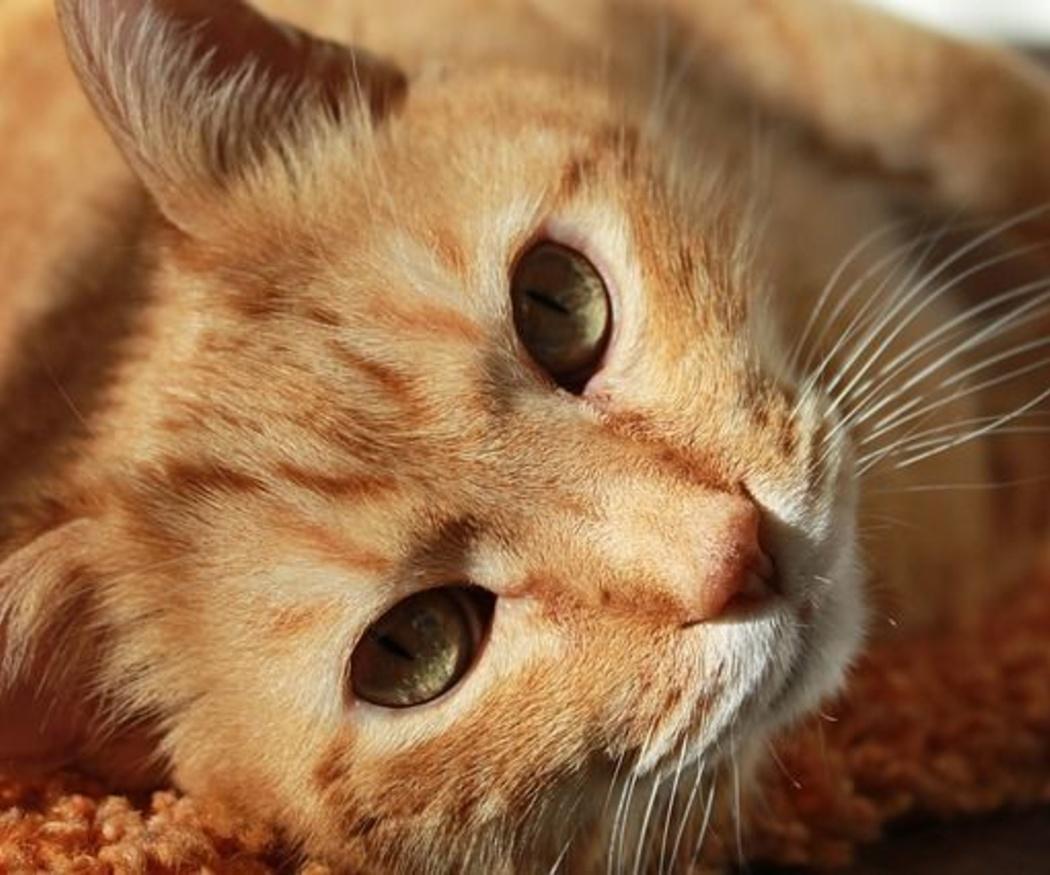 Cómo prevenir los golpes de calor en nuestras mascotas