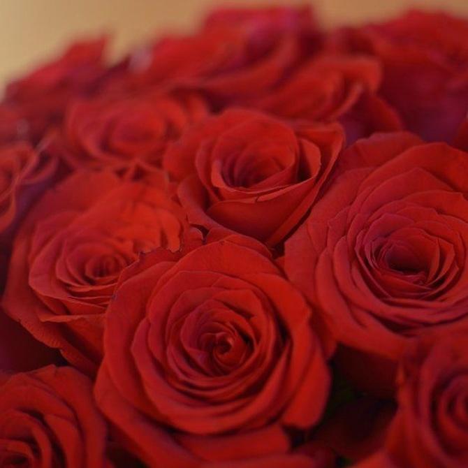 El lenguaje de las rosas según su color