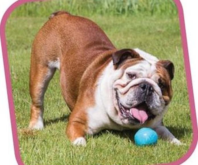 Beco Ball juguete pelota para poner chuches dentro con aroma a vainilla