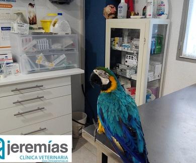 Historia veterinaria:  por el día del veterinario (último Sábado de Abril)
