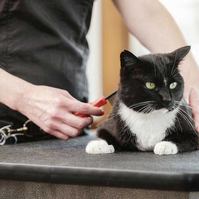 Consejos para prevenir las bolas de pelo en los gatos
