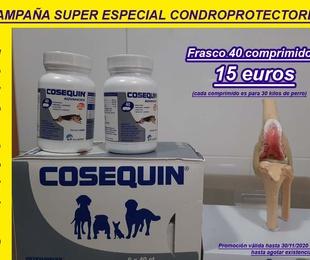CAMPAÑA SUPER ESPECIAL CONDROPROTECTORES
