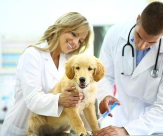 Oftalmología: Servicios de Clínica Veterinaria Vetsur Fuengirola