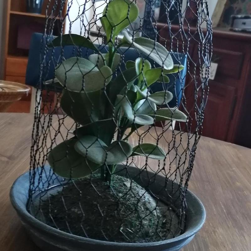 Planta artificial con rejilla de metal