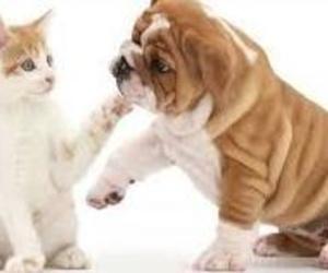 Campaña de esterilizacion canina y felina