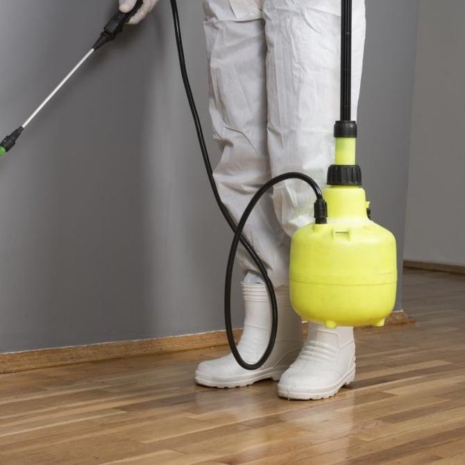 Consejos para evitar una invasión de termitas en casa