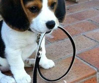 Normas para circular con tu perro por Madrid