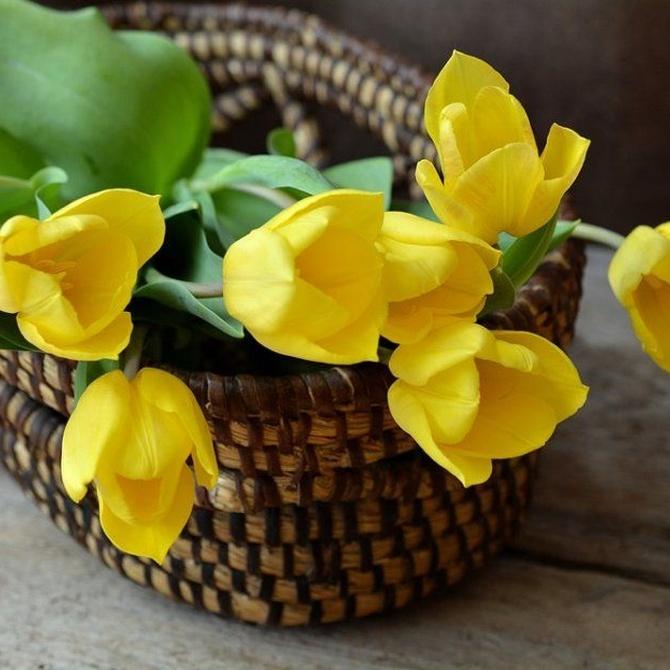 Cómo hacer que las flores duren más tiempo en casa