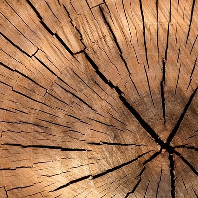 Diferencias entre la carcoma y la termita