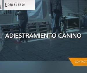 Adiestramiento canino en Cartagena | Piolcan