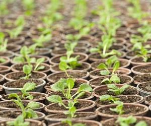 Venta de fertilizantes para el sector agrícola en Logroño