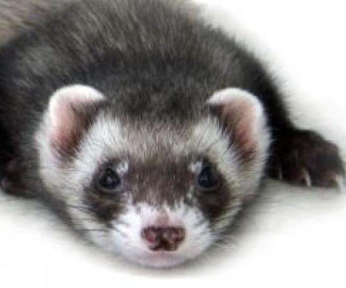 Animales exóticos: Servicios de Centre Veterinari de la Plana