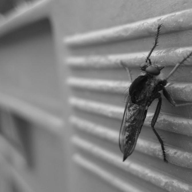 El aire acondicionado y los insectos