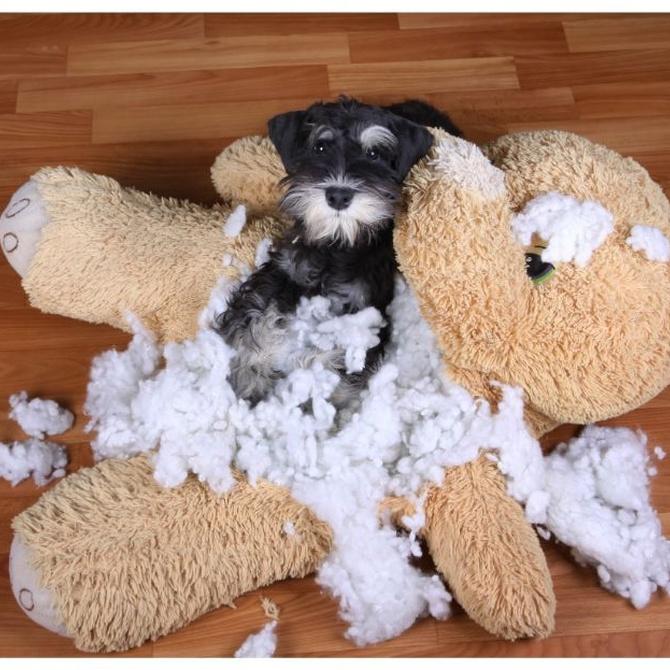 ¿Cómo ayudar a tu mascota cuando se queda sola en casa?