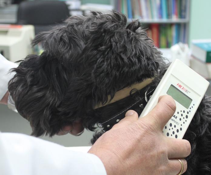 Microchip para perros Zaragoza: Nuestros Servicios de Argos Clínica Veterinaria
