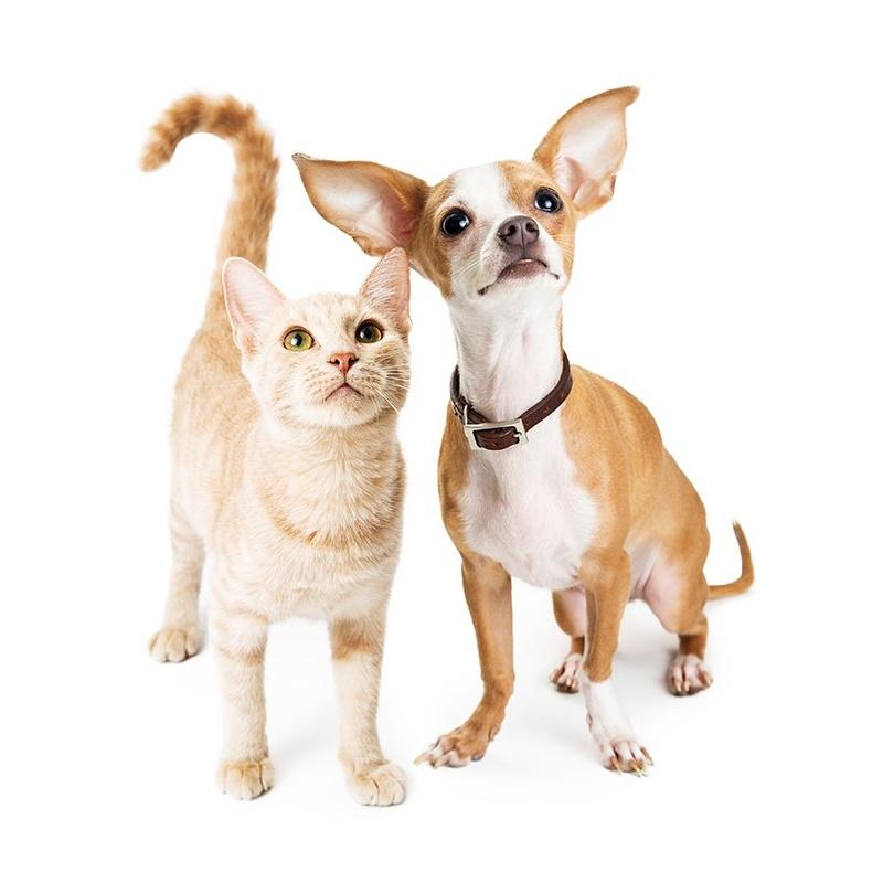 Consulta general veterinaria: Servicios de Clínica Veterinaria Habana Boston