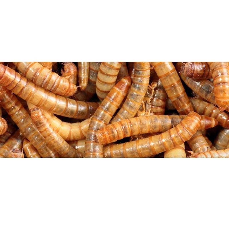 IPAs o insectos de productos alimentados: Servicios de Aplicaciones FumiServ