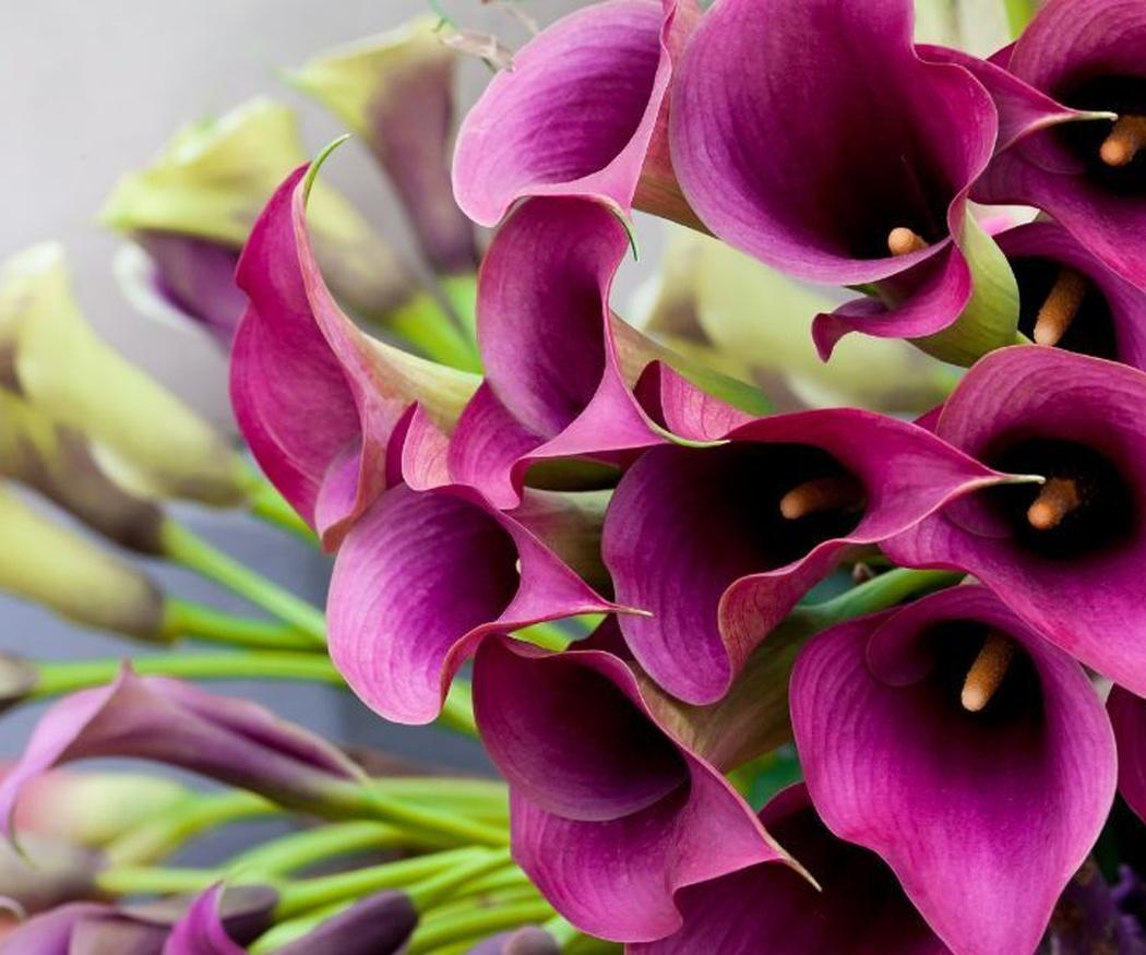 Por fin llegó el día, pero ¿qué flores le regalo en San Valentín?