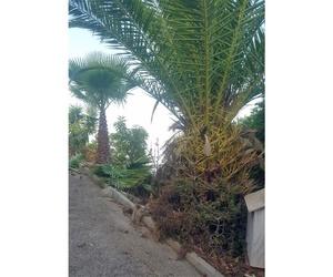 Venta de palmeras a particulares en Granada
