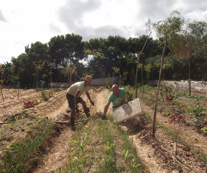 Sembrando y ultimando: Proyectos y Servicios de Asociación Domitila