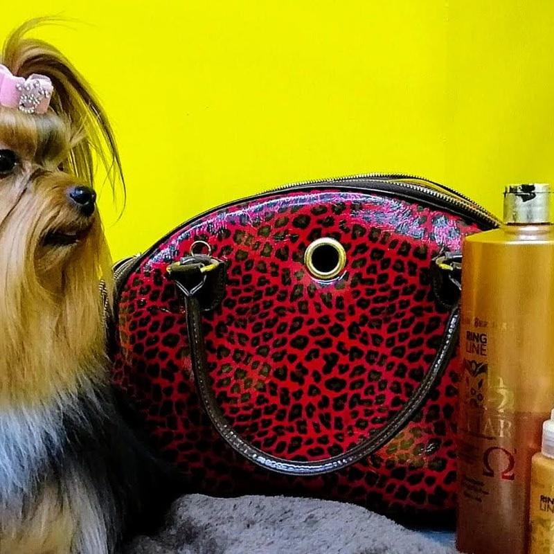 Perros: Productos y Servicios de Amazonas 1
