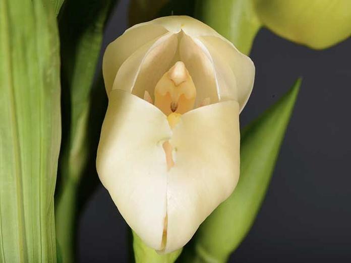 Orquídea Venus : Terapias de Terapias Alternativas Isabel