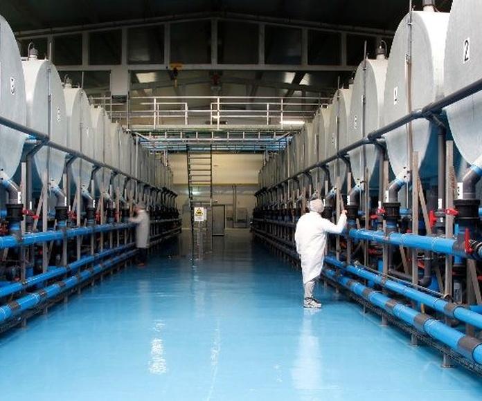 Montajes, estructuras e instalaciones: Nuestros servicios de Pofisur