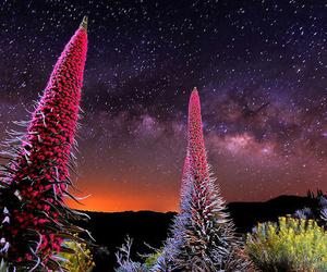 Noche con estrellas y Tajinastes