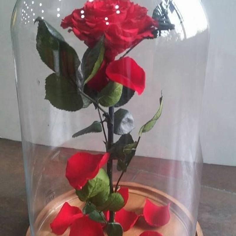 Flor preservada: TIENDA ONLINE Y CATÁLOGO de Floristería y Regalos Caprichos Parla
