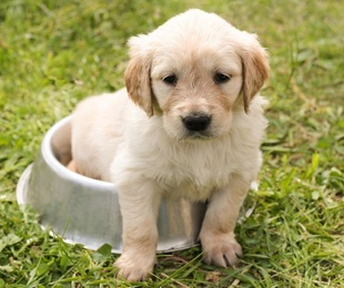 Alimentos dañinos para los perros: Las frutas