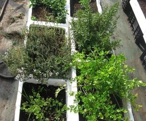 Plantas aromáticas ecológicas en A Coruña