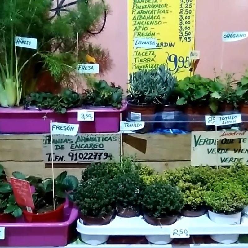 Plantas aromáticas y semilleros: Servicios de Madrid Tropical Frutas Selectas