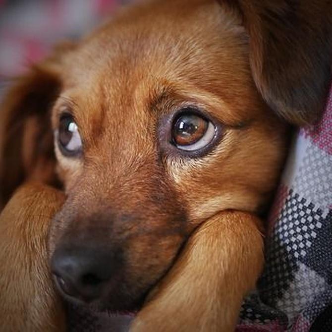 Cosas que debes tener en cuenta para adoptar una mascota