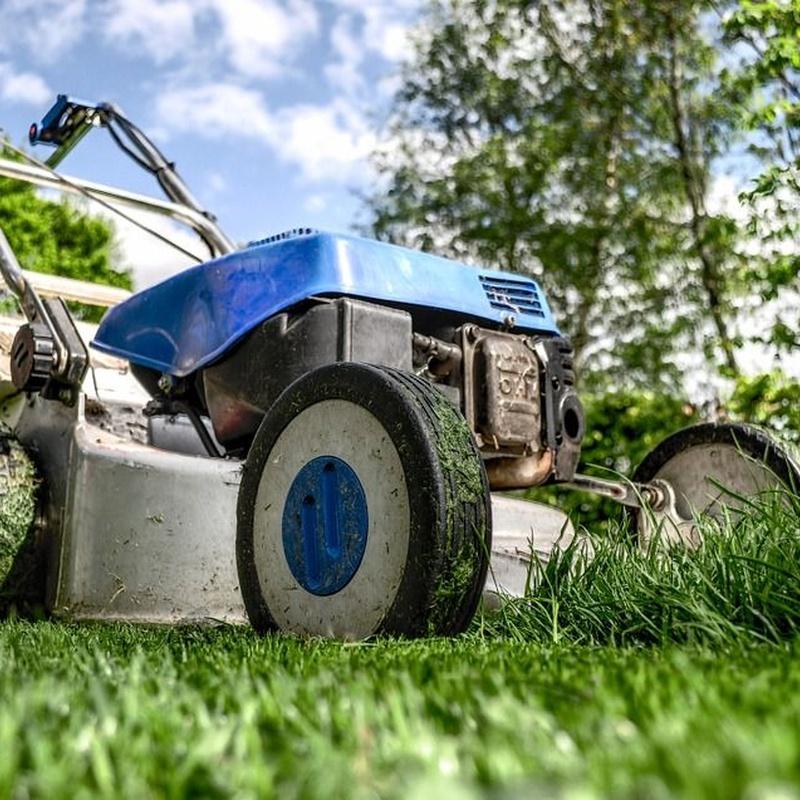 Mantenimiento de jardines: Servicios de Limpiezas Elym