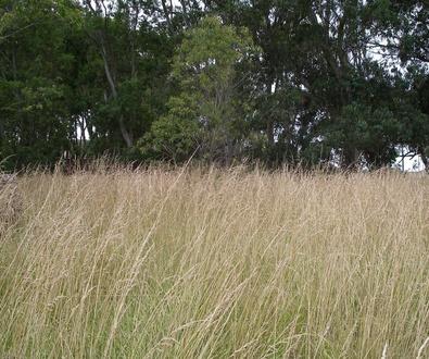 Las semillas de Chía: un superalimento