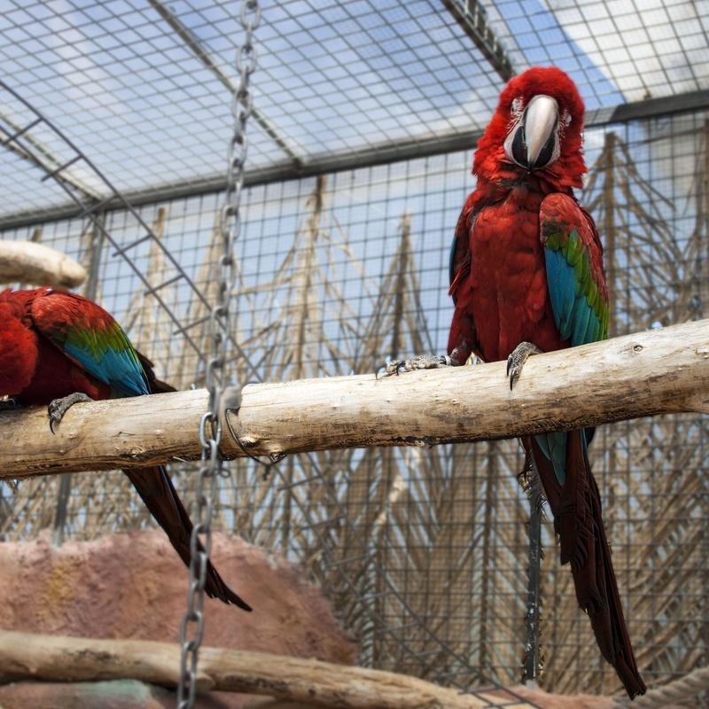 Animales Exóticos: Servicios Veterinarios de Hospital Veterinario Ciudad Real