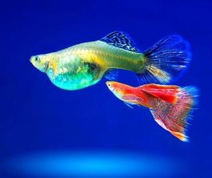 Venta de peces y acuarios