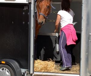 Remolques para caballos en Cádiz