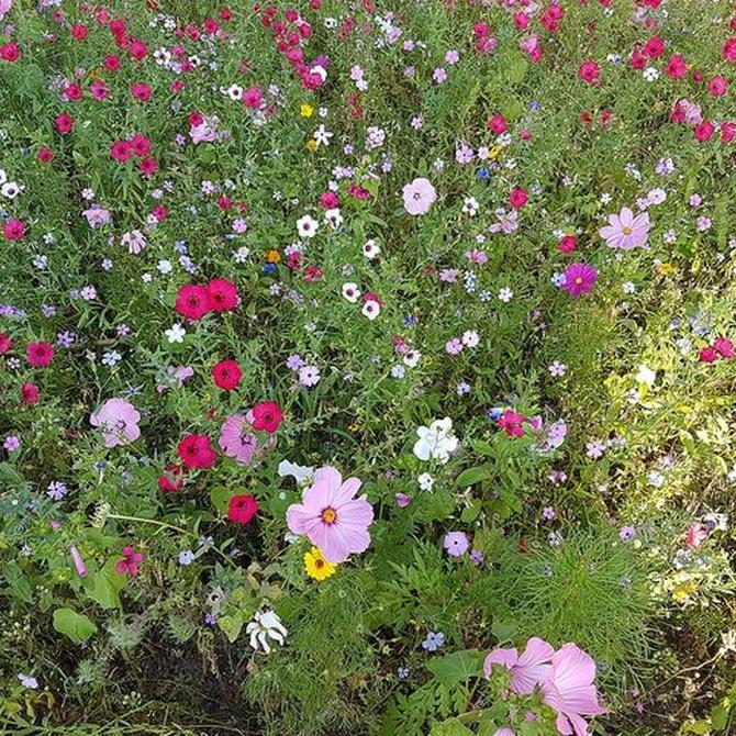 Claves para el cuidado de tu jardín
