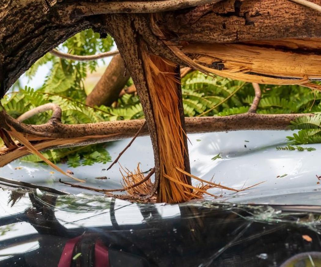 La tala de árboles enfermos
