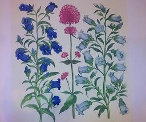 Serie botánica sobre papel de japón, iluminadas con acuarelas