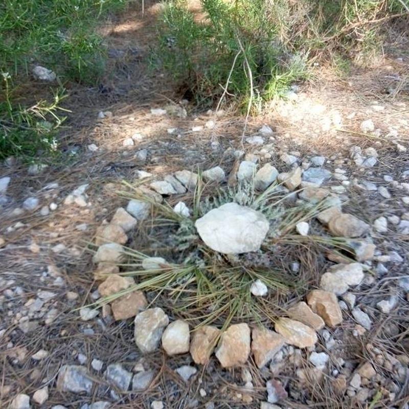 Mandala individual realizado en conexion con la naturaleza y nuestro interior